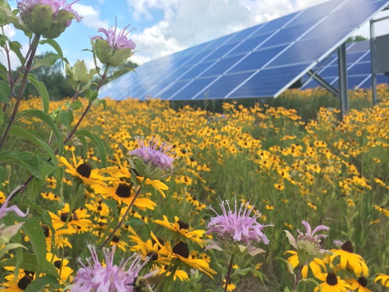 Plant a Solar Pollinator Garden